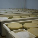 the brine process for hard chesse